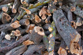Fire wood for the winter — Stock Photo