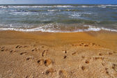 Traces on sand. — Stock Photo