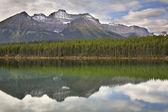 Berg, trä och sjön. — Stockfoto