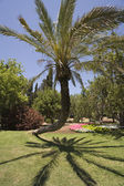 Fancifully curved palm tree — Stock Photo