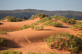 Soft pink sand dunes and shrubs hardy — Stock Photo
