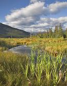 Picturesque bog. — Stock Photo