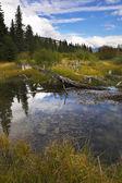 Mosse i kalla nordliga bergen och hakar på kusten — Stockfoto