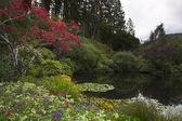 在公园池塘 — 图库照片