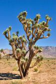 De bewoner van de woestijn. — Stockfoto