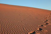 Deep marks on the crest of the dune — Stock Photo