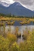 Superficial lake — Zdjęcie stockowe