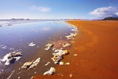 Sandy beach and the rests of sea foam — Stock Photo
