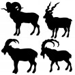 Silhouette mountain ram on white background - Stock Vector