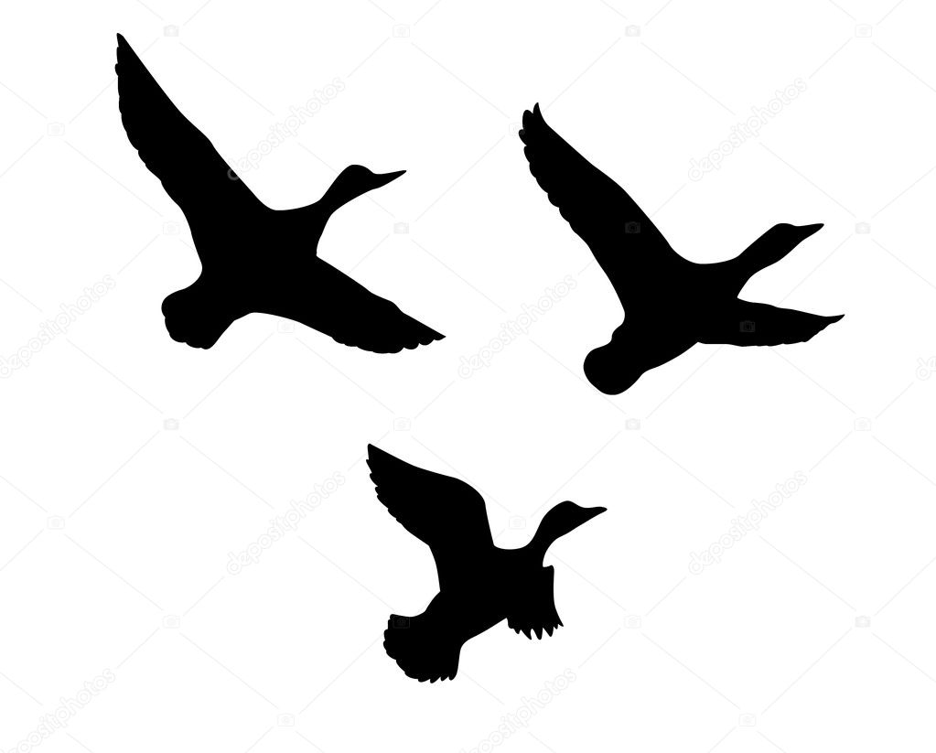 Vector silhouette flying duck on white background — Grafika wektorowa #5521873