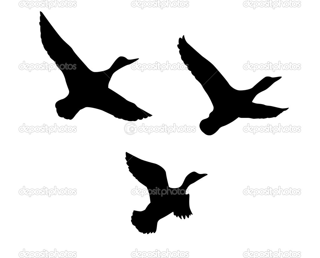 Vector silhouette flying duck on white background — Imagen vectorial #5521873