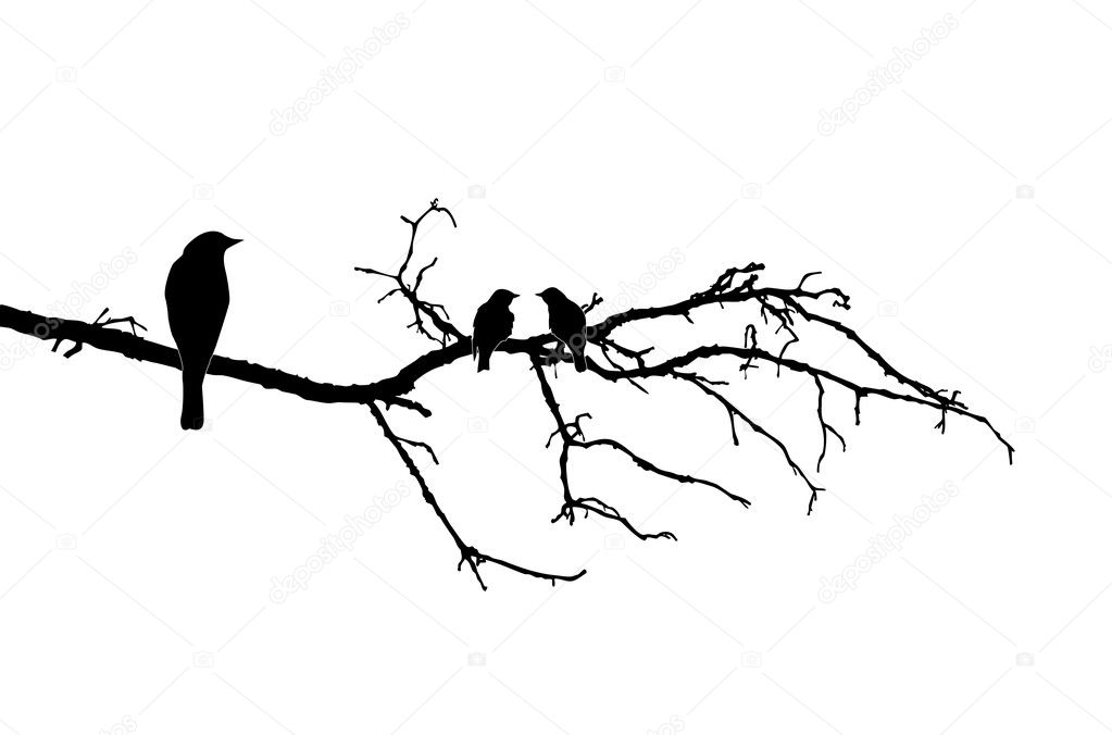 Vector silhouette of the birds on branch — Stock Vector #5522144