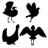 Birds — Vettoriale Stock