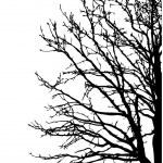 Silhouette tree — Stock Vector #6527835