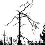 Dry tree — Stock Vector #6527854
