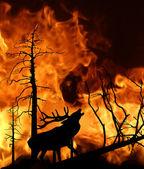 Deer running away from fire in wood — Stock Vector