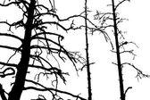 árbol seco — Vector de stock