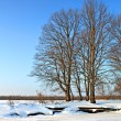 Winter landscape — Stock Photo #6549442
