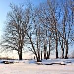 Winter landscape — Stock Photo #6549443