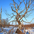 Winter landscape — Stock Photo #6591955