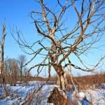 Winter landscape — Stock Photo #6591955