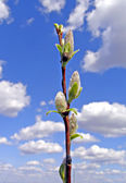 Spring landscape — Стоковое фото