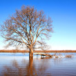 Tree in water — Stock Photo