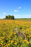 Dandelions on field — Stock Photo