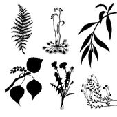 Vector set of the plants on white background — Stock Vector