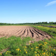 Royalty-Free Stock Photo: Plow field