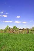Broken oak — Stock Photo