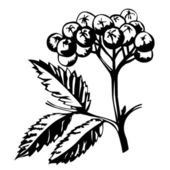 Vector silhouette of rowanberry on white background — Vector de stock