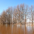 Stock Photo: Flood in wood