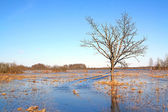 Flood in wood — Stock Photo