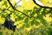 Green wood — Stock Photo