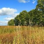 Autumn field — Stock Photo