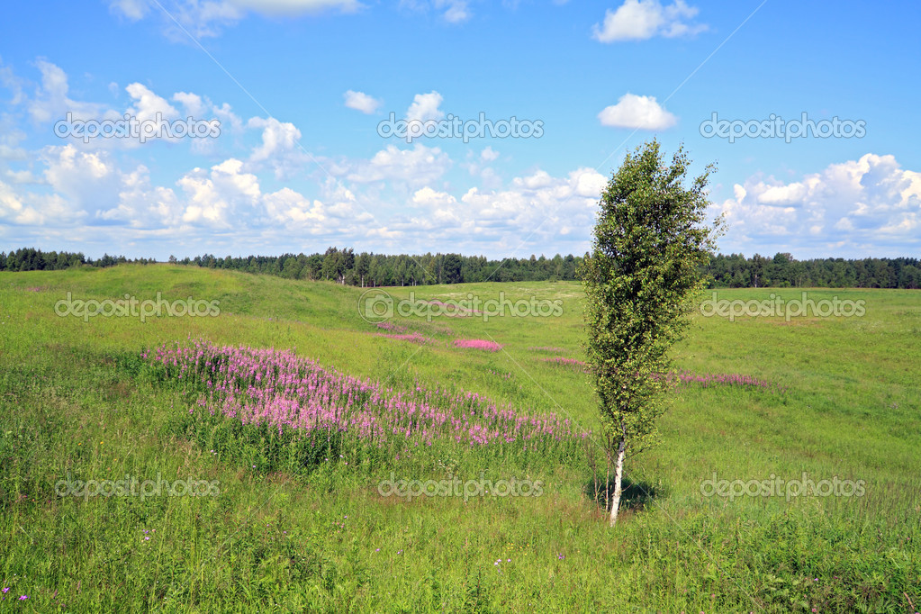 Birch on field — Stock Photo #6743998