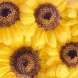 Sunflower background — Stock Photo #6715300