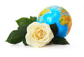 White rose on a background of the globe. — Stock Photo