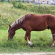 Stock Photo: Stallion graze in countryside.