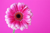Pink flower on background — Stock Photo