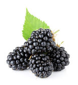 Ripe blackberry fruits — Stock Photo