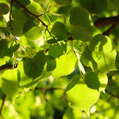 Green leaves backround — Stock Photo