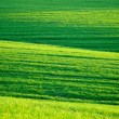 Stock Photo: Green hilly spring meadow
