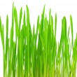 Fresh green grass on a white background — Stock Photo