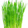 Fresh green grass on a white background — Stock Photo #6001341