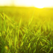 Bright vibrant green grass close-up — Stock Photo