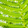 Close-up of a fresh green fern leaves — Stock Photo