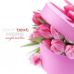 Tulipas cor de rosa — Foto Stock