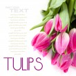 Pink tulips — Stock Photo #5486213